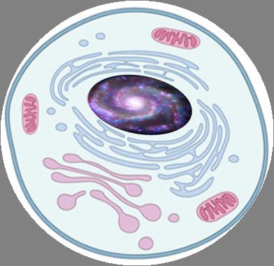 Universe inside the nucleus